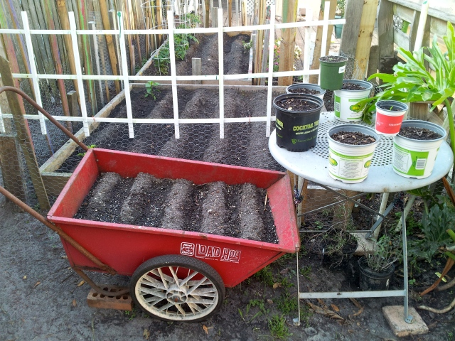 We broke the wheel off the wheelbarrow, so we turned it into an herb garden!